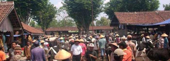 Selama tiga kali pasaran terakhir, harga penjualan sapi di Pasar Hewan Sunggingan, Boyolali mengalami penurunan Rp 500.000 – Rp1 juta tiap ekor.